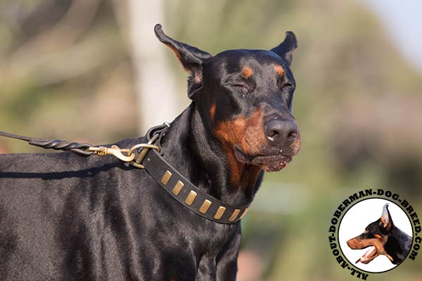 Doberman leather collar with rust-proof fittings for quality control