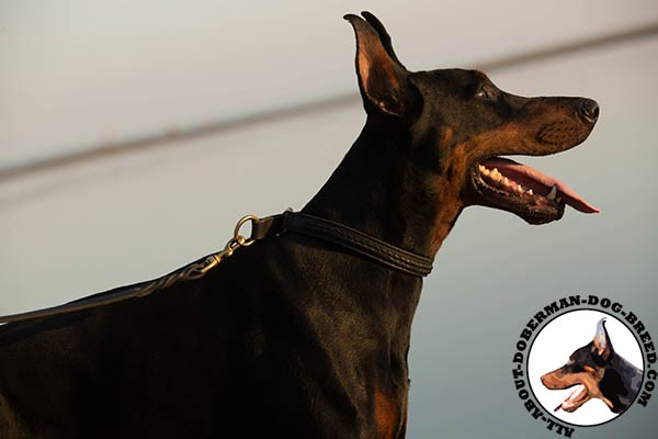 Doberman black leather collar with rustless fittings for walking in style