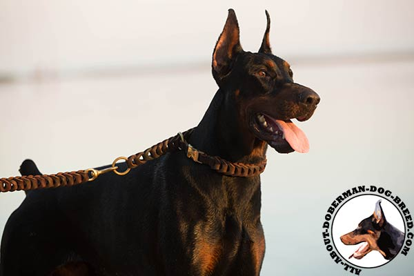 Doberman brown leather collar with reliable hardware for any activity