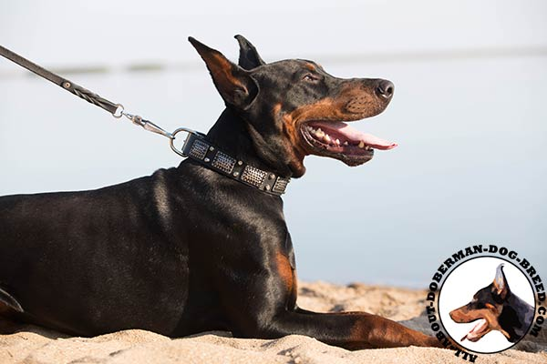 Doberman black leather collar with strong fittings for professional use