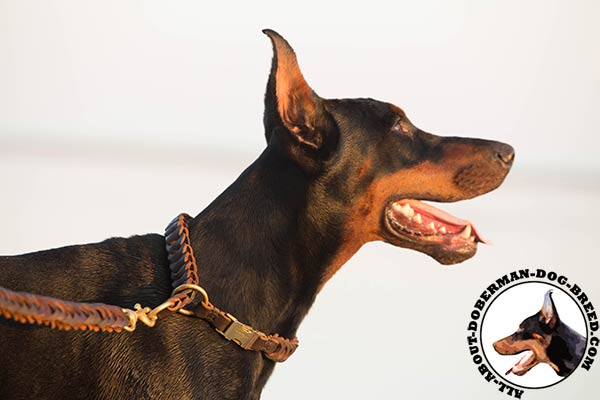 Doberman brown leather collar of lightweight material with quick release buckle for daily activity