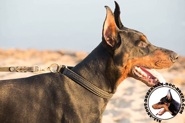 Doberman leather collar easy-to-adjust with brass plated hardware for professional use