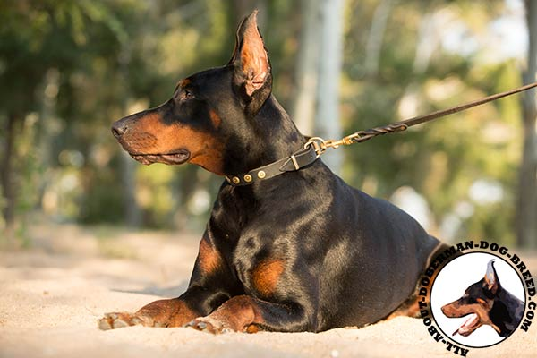 Doberman black leather collar easy-to-adjust studded for quality control
