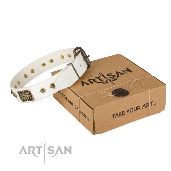 Trendy leather dog collar for daily use