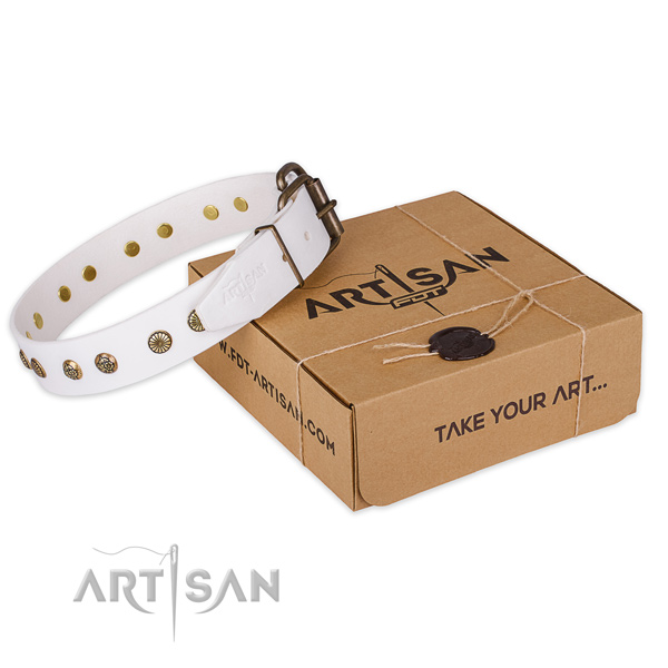 Trendy leather dog collar for daily walking