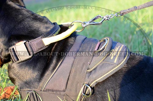 Quick release buckle for your Doberman