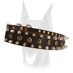 Extra strong spiked collar for Doberman