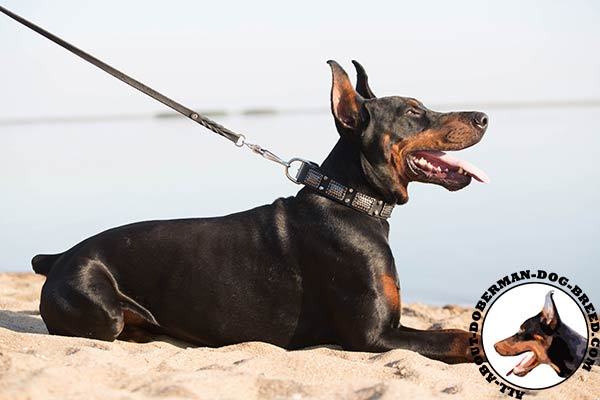 Soft and strong leather collar for active Doberman Dog