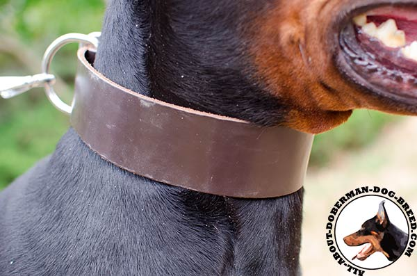 Doberman leather collar for different outdoor activities