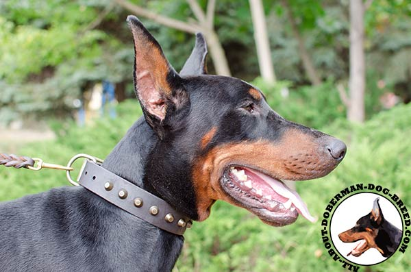 Durable leather collar with decorations for Doberman