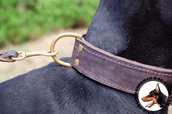Extra wide training Doberman collar