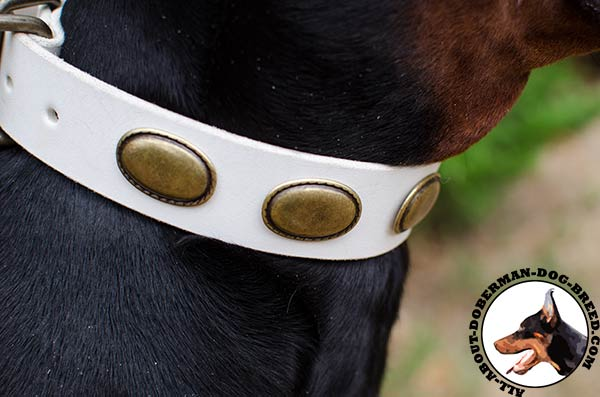 Doberman leather collar with amazing plates