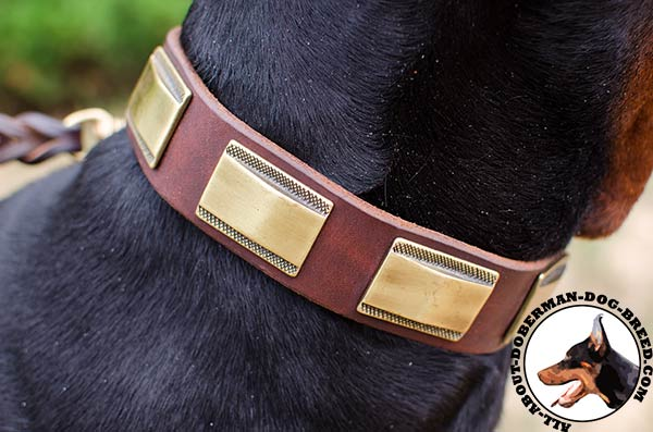 Strong leather decorated collar for active Doberman