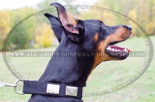 D-ring for leash attachment for Doberman collar