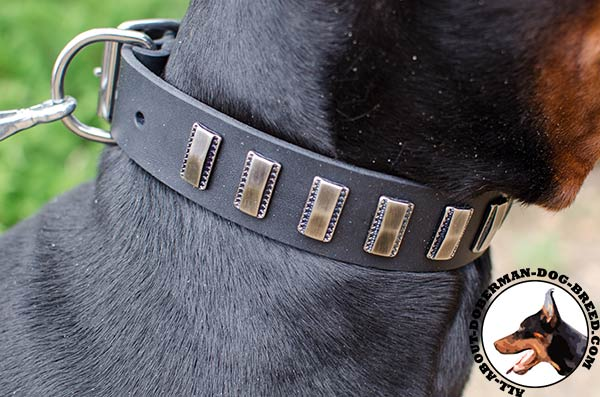 Fancy leather collar with vintage plates