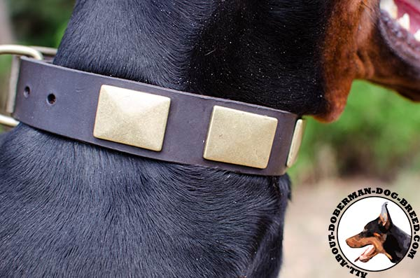 Leather Doberman collar with nickel plates