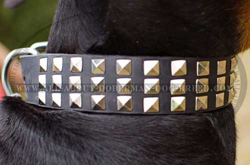 Shiny pyramids for leather Doberman collar