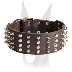 Spiked and studded Doberman collar