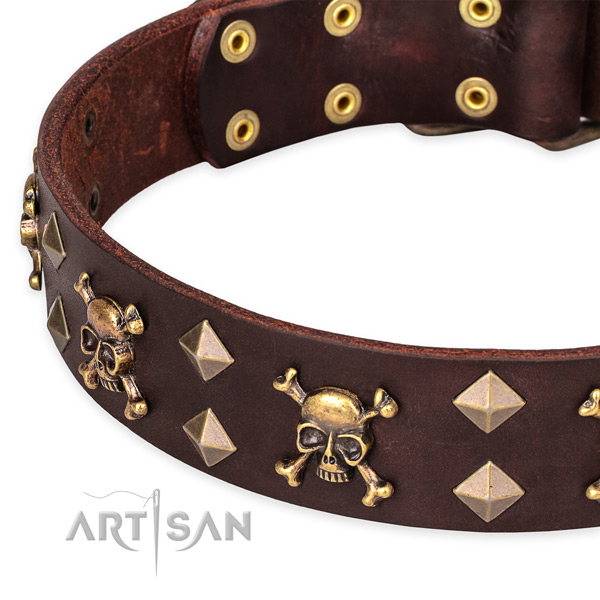 Casual style leather Doberman collar with astonishing studs