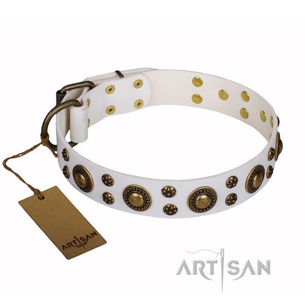Stylish leather collar for your favourite four-legged friend