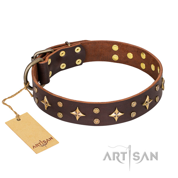 Reliable leather dog collar with riveted fittings