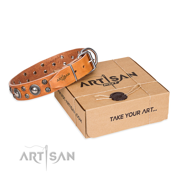 Day-to-day leather dog collar with fashionable adornments