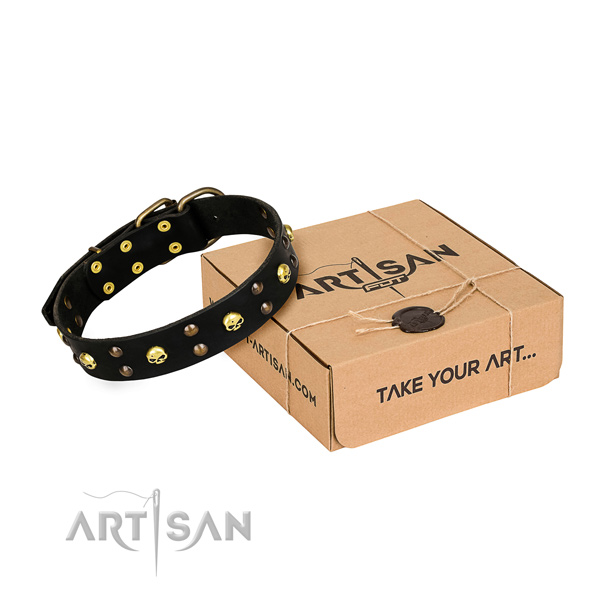 Daily leather dog collar with fashionable adornments
