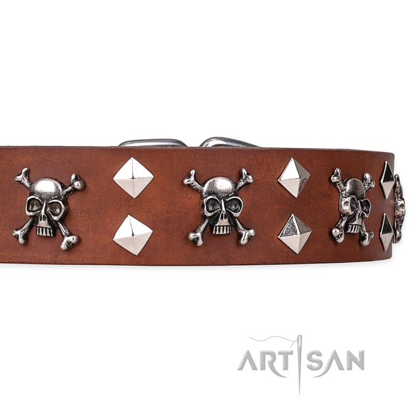 Day-to-day leather dog collar with exciting studs