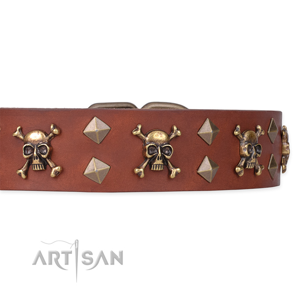 Daily leather dog collar for reliable usage