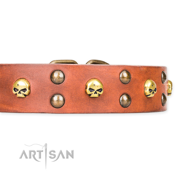 Everyday leather dog collar for stylish walks