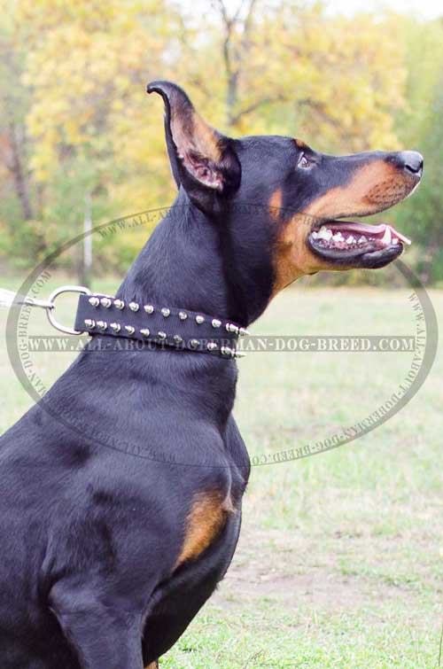 Easy-to-handle nylon Doberman collar with spikes