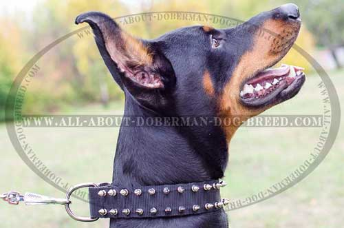 Nylon Doberman collar with two rows of spikes