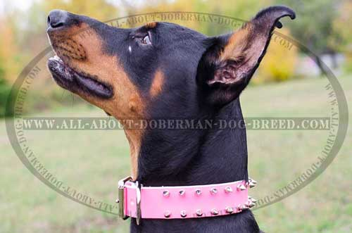 Best quality pink leather Doberman collar