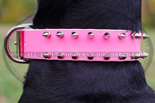 Spiked Doberman collar of pink leather