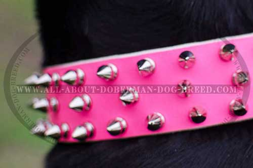 Pink leather Doberman collar with spikes