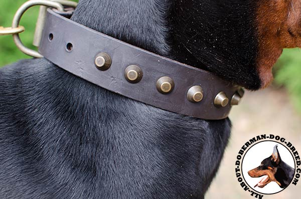 Decorated leather Doberman collar for everyday walking