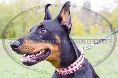Studded pink Doberman leather collar