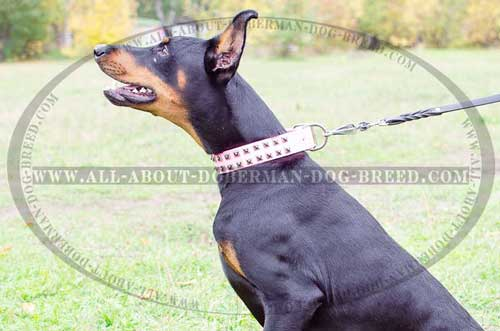 Pink Doberman collar for walking