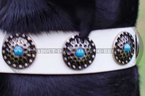 Luxury decorated Doberman collar