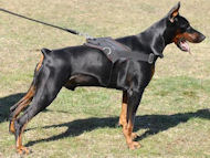 nylon dog harness for doberman pinscher