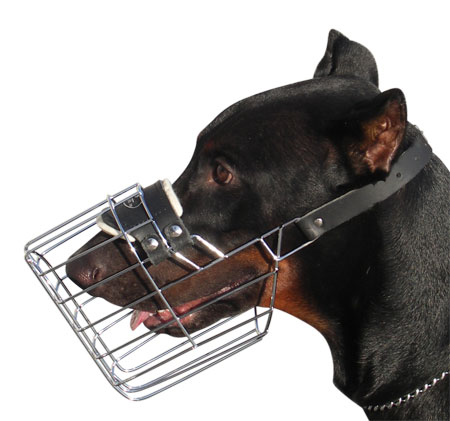 Martingale also Pitbullsupply likewise Bobby Delice Collection Leather Cat Collar moreover Double D Ring Leather Dog Collar also Ruff Wear Approach Pack Saddlebag For Dogs. on leather dog harness