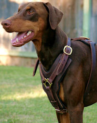 Doberman Dog Harnesses,leather dog harness