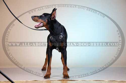 Thick Felt Padded Harnessfor Doberman