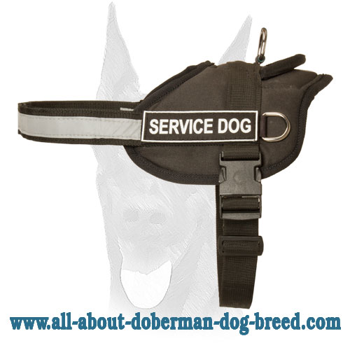 Comfortable and safe Doberman harness