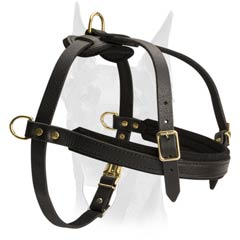 Multitask leather Doberman harness
