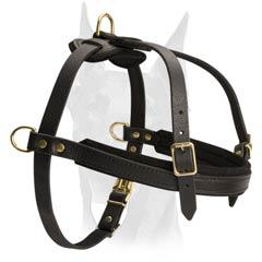 dog walking harness