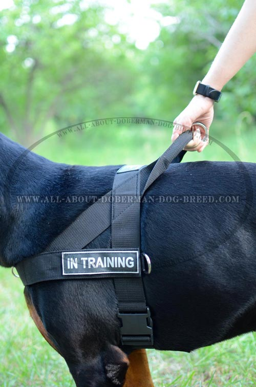 All weather nylon harness for Doberman
