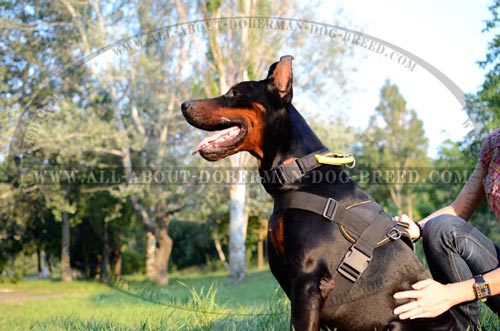 Fully adlustable nylon harness for Doberman