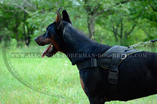 Comfy and safe Doberman nylon harness