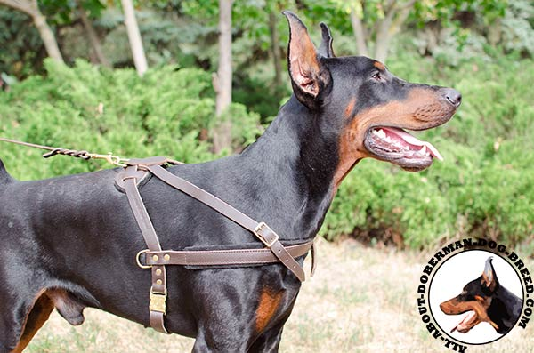 Pulling and tracking leather Doberman harness